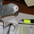 Our parrot Eddie helps us to work on our profile